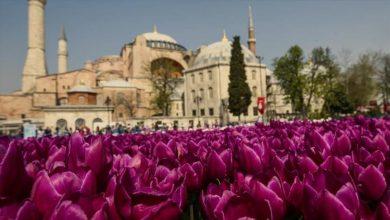 أزهار اسطنبول