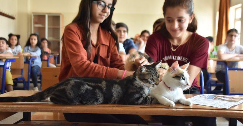 قطة تركية