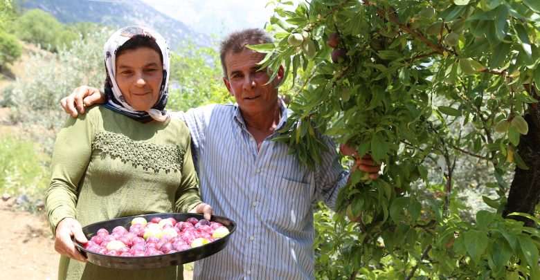 مزارع تركي