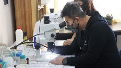 عالم تركي يكتشف فطرا نادرا في القطب الجنوبي